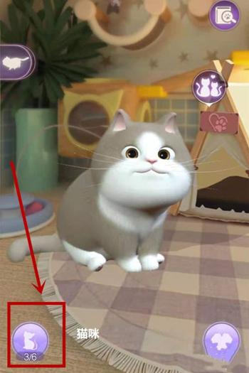 《时光公主》怎么照料猫咪